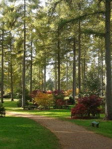 Westonbirt Autumn Splendour