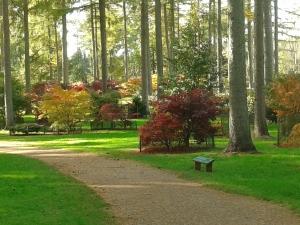 Westonbirt Arboretum - Autumn Path