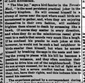 """The blue jay"" - Hampshire Advertiser 16th November 1892"